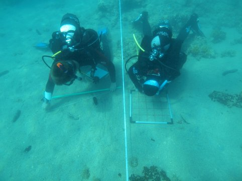 2014 scientific diving2